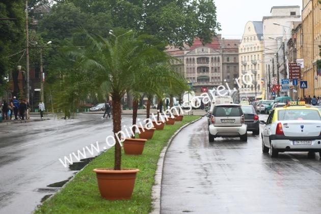 palmieri-timisoara-centru-17